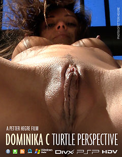 Dominika C Turtle Perspective