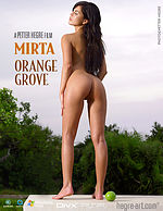 Mirta Orange Grove