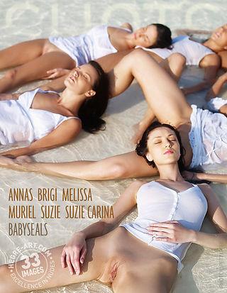 Anna S Brigi Melissa Muriel Suzie Suzie Carina bébés phoques
