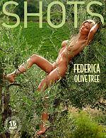 フェデリカ オリーブの木