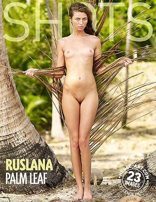 Ruslana palm leaf