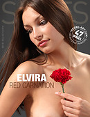 Elvira red carnation