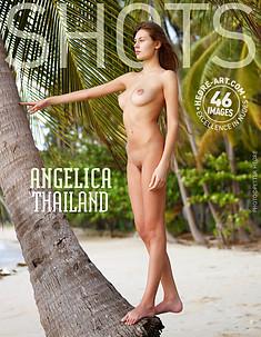 Angelica Thailand