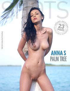 Anna S palm tree